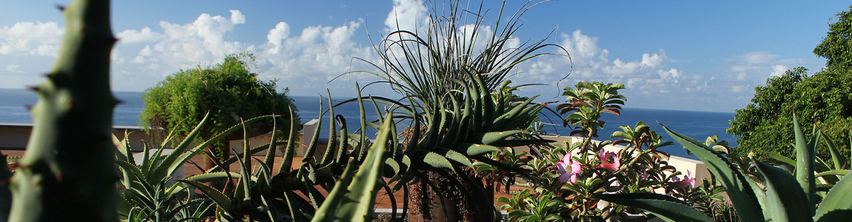 garden vieques tropics