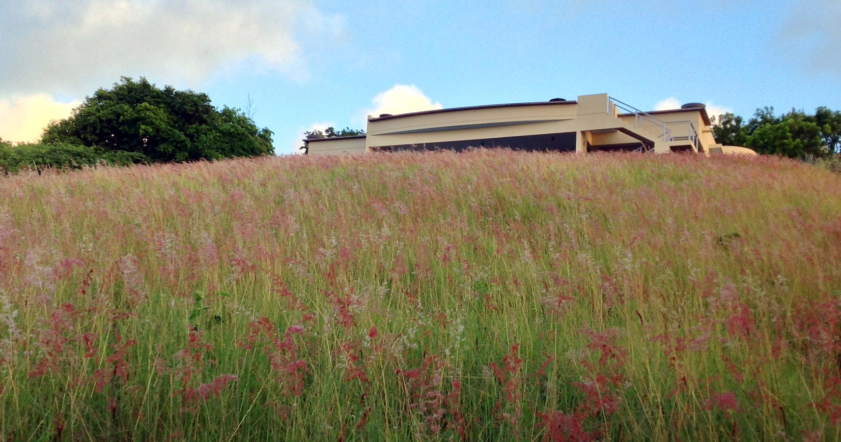 Grass fields of Quinta Jabali, Vieques villa rental
