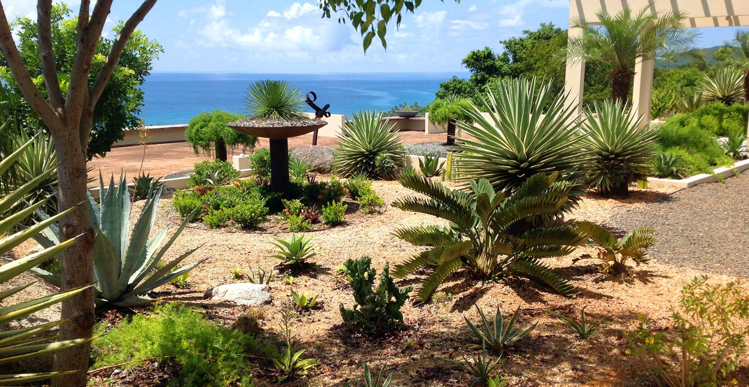 Vieques roof top garden